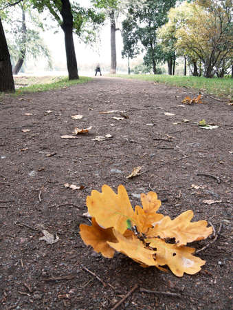 passerby: Falling oaks leafs in the town park