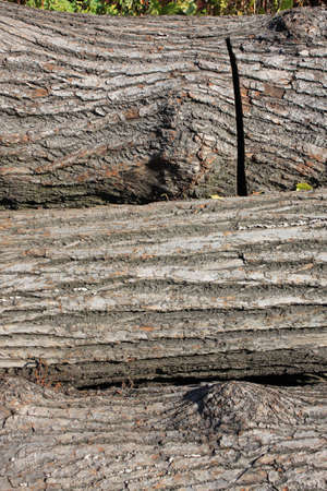 sawed: Sawed tree