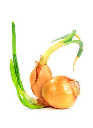 Spring onions photo