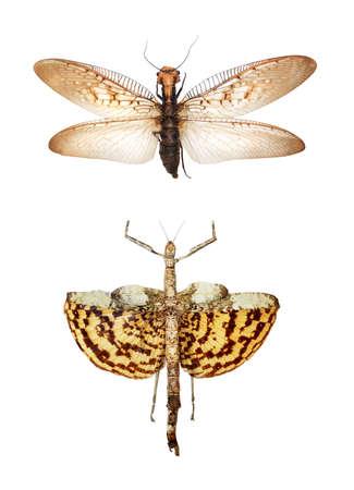 gigantesque: Gigantesques insectes tropicaux Banque d'images