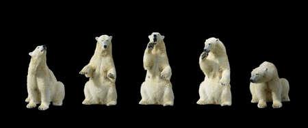 oso:  Osos polares de pie en el aislamiento de las patas traseras sobre fondo negro                      Foto de archivo