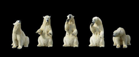 Polar bears standing on hind legs  isolation on black background                      photo