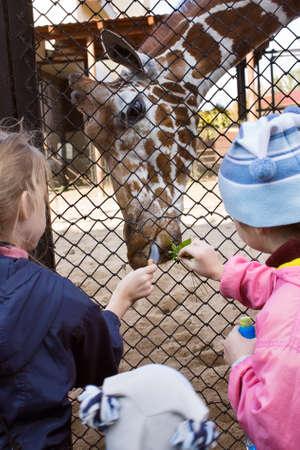 Feeding a giraffe at the zoo children Stock Photo