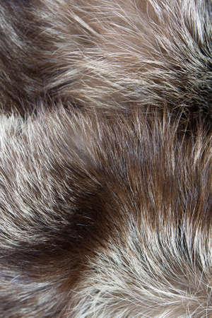 Fur silver fox background