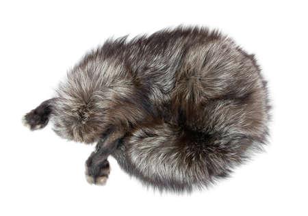 silver fox: Cuello de piel como zorro plateado Foto de archivo