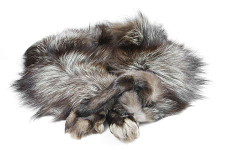 silver fox: Cuello de zorro plateado Foto de archivo