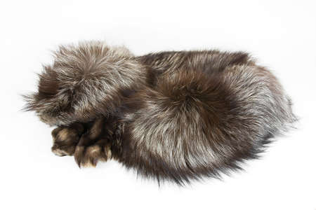 silver fox: Collar of silver fox