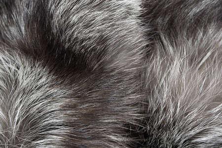 Background Fur silver fox