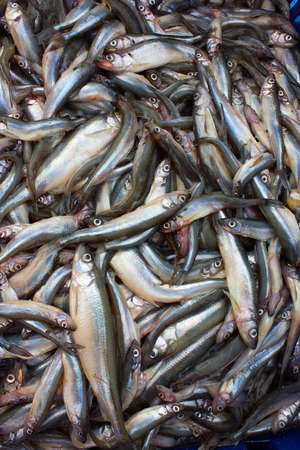 Heaps of freshwater fish Stock Photo