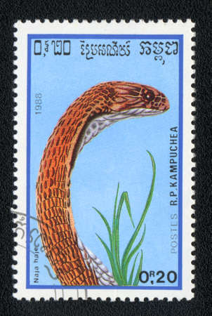 KAMPUCHEA - CIRCA 1988: A stamp printed in Kampuchea and shows shake Egyptian cobra - Naja haje, circa 1988 photo
