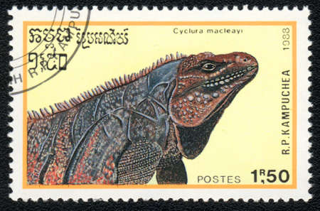 postmail: KAMPUCHEA - CIRCA 1988:  A stamp printed in Kampuchea and shows rare blue giant iguana - Cyclura macleayi, circa 1988