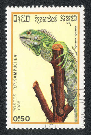 postmail: KAMPUCHEA - CIRCA 1988: A stamp printed in Kampuchea and shows Green Iguana or Common Iguana - iguana iguana, circa 1988