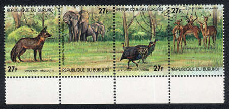 The Republic of Burundi - CIRCA 1978: A Stamp printed in the Republic of Burundi shows image of Animals in Central Africa: Bat-eared Fox (Otocyon megalotis), African Bush Elephant (Loxodonta africana), Vulturine Guineafow (Acryllium vulturinum), impala (A photo