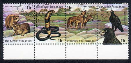 The Republic of Burundi - CIRCA 1978: A Stamp printed in the Republic of Burundi shows image of Animals in Central Africa, circa 1978 photo