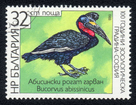 BULGARIA - CIRCA 1988: A post stamp printed in BULGARIA shows Abyssinian Ground Hornbill , series , circa 1988  photo