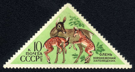 USSR - CIRCA 1973: A Stamp printed in USSR shows image of a  dappled deer with the inscription  photo