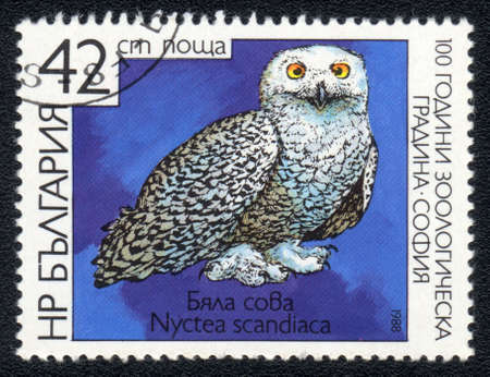 BULGARIA - CIRCA 1988: A post stamp printed in BULGARIA shows Snowy Owl - Nyctea scandiaca , series , circa 1988  photo