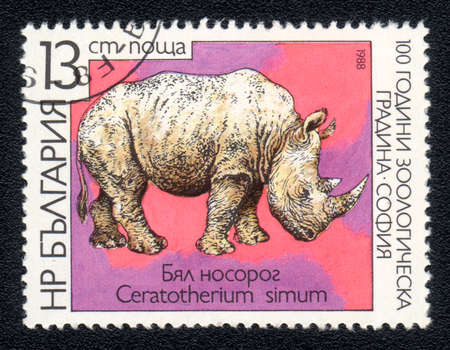 perforated stamp: BULGARIA - CIRCA 1988: A post stamp printed in BULGARIA shows a Ceratotherium simum, series, circa 1988  Stock Photo