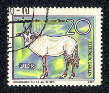 ddr: DDR - CIRCA 1980: A Stamp printed in DDR shows image of a Arabian Oryx antelope, circa 1980  Stock Photo