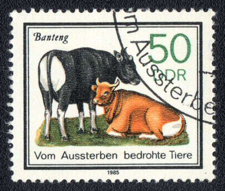 ddr: DDR - CIRCA 1985: A Stamp printed in DDR shows image of a banteng, circa 1985
