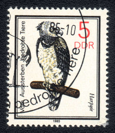 DDR - CIRCA 1985: A Stamp printed in DDR shows image of a Harpyie , circa 1985  photo