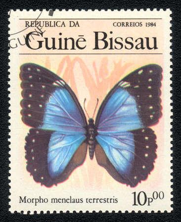 morpho menelaus: GUINEA-BISSAU - CIRCA 1984: Un sello impreso en Guinea-Bissau se muestra la imagen de un terrestris Morpho Menelao, mariposa Morpho Menelao terrestris, alrededor del a�o 1984 Foto de archivo