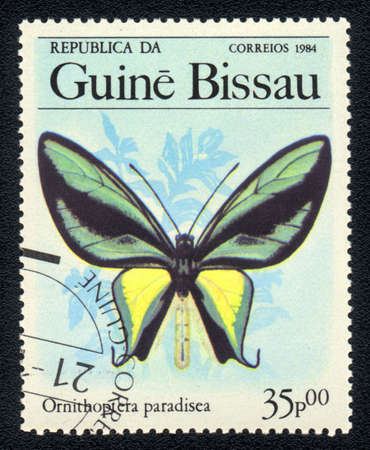 GUINEA-BISSAU - CIRCA 1984: A Stamp printed in GUINEA-BISSAU shows image of a   butterfly Paradise birdwing - ornithoptera paradisea, circa 1984 Stock Photo - 10088648