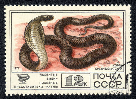 USSR - CIRCA 1977: A Stamp printed in USSR shows image of a Central Asian Cobra (Naja oxiana) from the series   photo