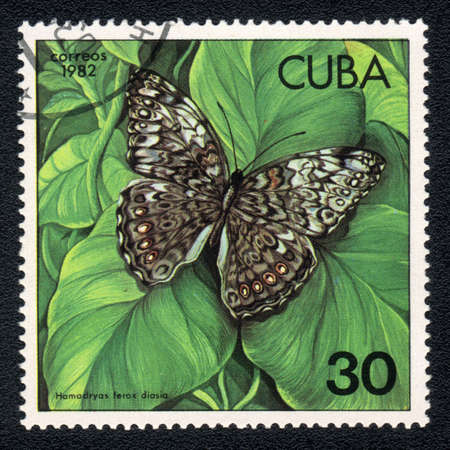 cuba butterfly: CUBA - CIRCA 1982: A Stamp printed in CUBA and shows image of a  butterfly (Hamadryas )on the plant background, circa 1982 Stock Photo