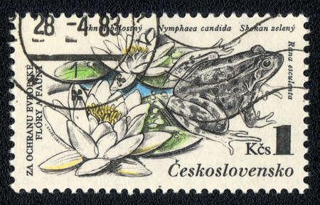 amphibia: CZECHOSLOVAKIA - CIRCA 1983: A Stamp printed in CZECHOSLOVAKIA shows image of arana esculenta and nimfaea candida, from the series Flora and fauna, circa 1983 Stock Photo