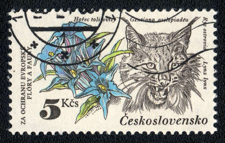 czechoslovakia: CZECHOSLOVAKIA - CIRCA 1983: A Stamp printed in CZECHOSLOVAKIA shows image of a lynx and gentiana, from the series Flora and fauna, circa 1983