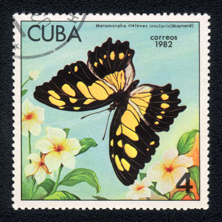 cuba butterfly: CUBA - CIRCA 1982: A Stamp printed in CUBA and shows image of a  Malachite Butterfly (metamorpha stelenes insularis) on the plant background, circa 1982 Stock Photo