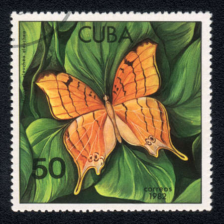 CUBA - CIRCA 1982: A Stamp printed in CUBA and shows image of a  butterfly (Marpesia eleuchea) on the plant background, circa 1982 photo