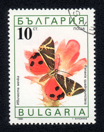 BULGARIA - CIRCA 1990: A Stamp printed in BULGARIA and shows image of a  butterfly (panaxia quadripunctaria) on the red flower, circa 1990  Stock Photo - 10088603