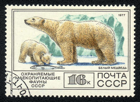 USSR - CIRCA 1977: A Stamp printed in USSR shows image of a polar bear (Ursus maritimus) from the series