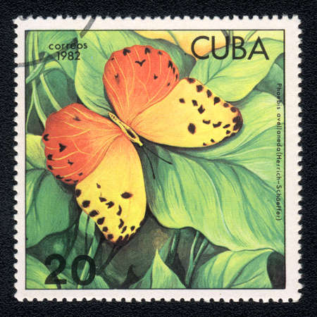 CUBA - CIRCA 1982: A Stamp printed in CUBA and shows image of a  butterfly Red-splashed Sulphur  (phoebis avellaneda) on the plant background, circa 1982 photo