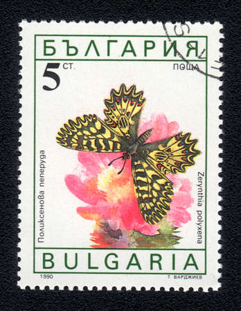 BULGARIA - CIRCA 1990: A Stamp printed in BULGARIA and shows image of a  butterfly (Zerinthia polyxena) on the red flower, circa 1990 Stock Photo - 10088604