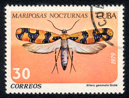 cuba butterfly: CUBA - CIRCA 1979: A Stamp printed in CUBA shows image of a Attera gemmata Grote butterfly (Mariposas nocturnas), circa 1979