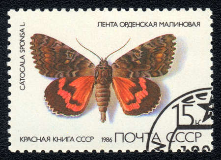 catocala: USSR - CIRCA 1986: A Stamp printed in USSR shows image of a Catocala sponsa butterfly, series