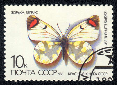 USSR - CIRCA 1986: A Stamp printed in USSR shows image of a Zegris eupheme butterfly, series  photo