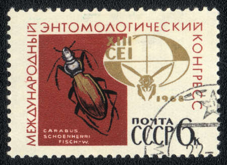 USSR - CIRCA 1968: A Stamp printed in USSR shows image of a carabus schoenherri, circa 1968  Stock Photo - 10289557