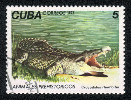 crocodylus: CUBA - CIRCA 1982: A Stamp printed in CUBA shows image of a crocodylus rhombifer,  from the series, circa 1982