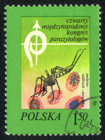 Poland - CIRCA 1980: A Stamp printed in Poland and shows image of a malaria mosquito, circa 1980  photo