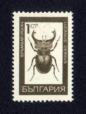 horn beetle: Bulgaria - CIRCA 1975: A Stamp printed in Bulgaria shows image of a lucanus cervus, circa 1975  Stock Photo