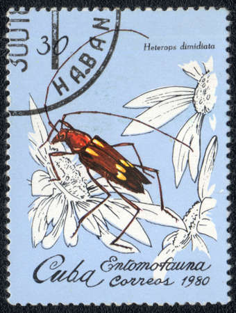 CUBA - CIRCA 1980: A Stamp printed in CUBA shows image of a heterops dimidiata beetle, from series - entomofauna, circa 1980  Stock Photo - 10291704