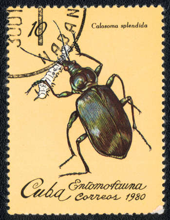 CUBA - CIRCA 1980: A Stamp printed in CUBA shows image of a  calosoma splendida beetle, from series - entomofauna, circa 1980 Stock Photo - 10291728
