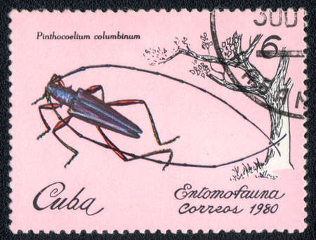CUBA - CIRCA 1980: A Stamp printed in CUBA shows image of a pinthocoelium columbinum beetle, from series - entomofauna, circa 1980  Stock Photo - 10291673