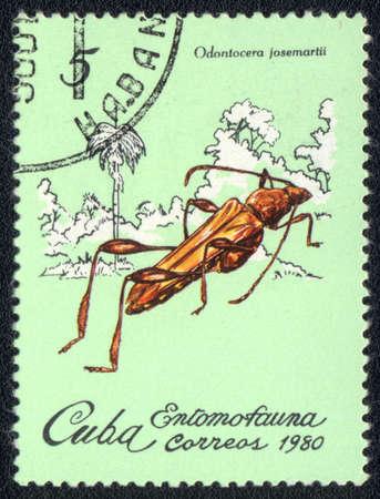 CUBA - CIRCA 1980: A Stamp printed in CUBA shows image of a odontocera josemartii beetle, from series - entomofauna, circa 1980 Stock Photo - 10291724