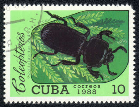 CUBA - CIRCA 1988: A Stamp printed in CUBA shows image of a (Odontotaenius zodiacus. Truqui) beetle, from series, circa 1988      Stock Photo - 10291730