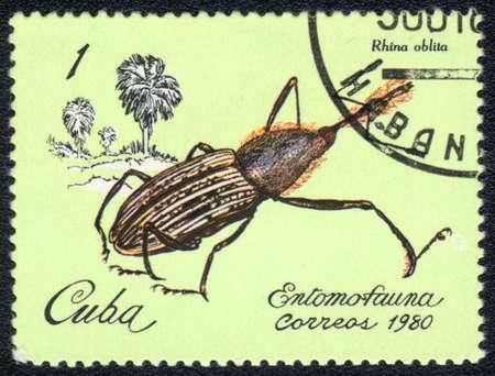 CUBA - CIRCA 1980: A Stamp printed in CUBA shows image of a rhina oblita beetle, from series - entomofauna, circa 1980 Stock Photo - 10291678